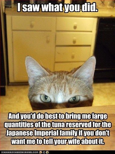 Do Cats Like Tuna So Much